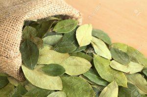 hoja-de-coca-planta-nativa-D_NQ_NP_763741-MLA25638305955_062017-F