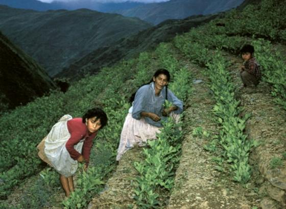 plantaciones-coca